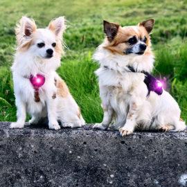 hundehjertet_orbiloc_til_sma_hunde_pink_lilla_nye_farver