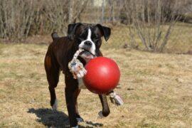 Jolly Pet - stærkt legetøj til stærke hunde