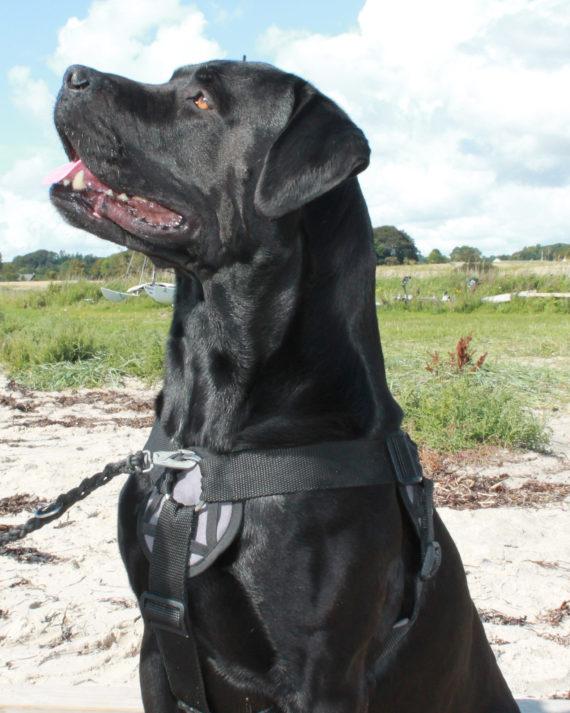 Freedog Walker, antitræk sele