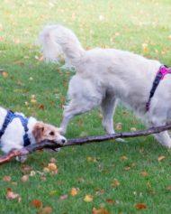 hundehjertet_dog_copenhagen_seler_til_hund