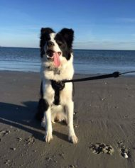 hundehjertet_freedog_walker_easywalk