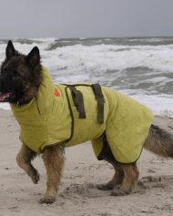 hundehjertet_siccaro_dakken_til_vad_hund