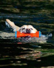 hundehjertet_chuckit_vand_legetoj_rugged_bumper_apport_vand_hund
