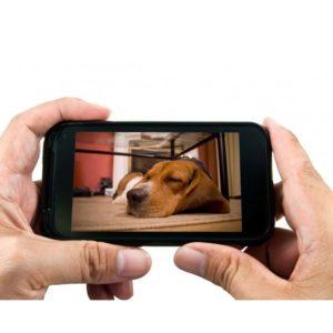 Eyeanimal Pet Vision Live Kamera