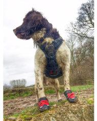 hundehjertet_ruffwear_brush_guard_pad_til_sele_med_hund