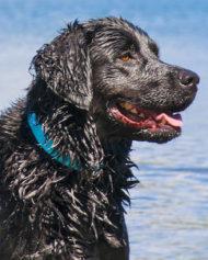 hundehjertet_ruffwear_headwater_halsband_vandtat