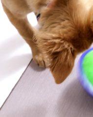 hundehjertet_kong_tiltz_nyhed_fra_kong_hund