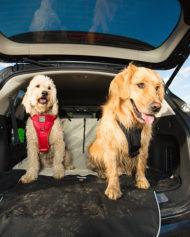 hundehjertet_kurgo_cargo_cape_beskytter_bagagerum_til_bil