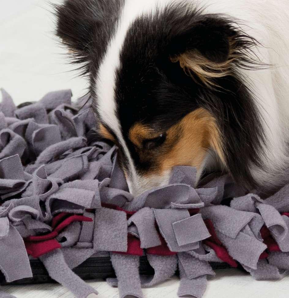 Activity Snusetæppe til din hund eller kat