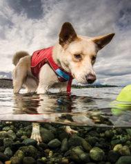 hundehjertet_kurgo_sten_til_hund