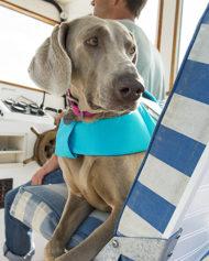 hundehjertet_ruffware_float_coat_redningsvest_blaa_til_din_hund