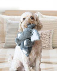 hundehjertet_kong_kiddos_elephant_bamse_til_hund