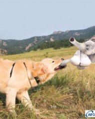 hundehjertet_kong_stretchezz_legz_elephant_bamse_elefant_til_din_hund