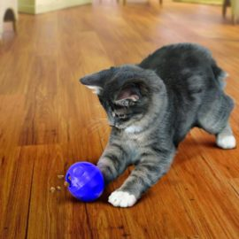 Kong Active Cat Ball