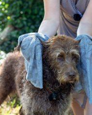 hundehjertet_siccaro_easydry_towel_haandklaede