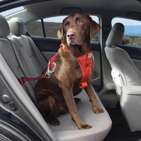 Hundehjertet Kurgo Tru-Fit Smart Sikkerhedssele Rød, Crashtestet